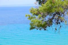 Ветвь сосны и море стоковая фотография