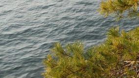 Ветвь сосны пошатывает в ветре против голубой поверхности Como озера стоковое фото rf