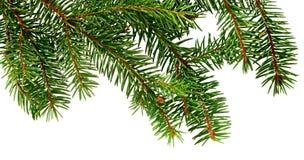Ветвь сосны рождество моя версия вектора вала портфолио вал ели ветви близкий вверх стоковые изображения rf