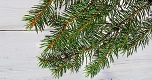 Ветвь сосны рождество моя версия вектора вала портфолио вал ели ветви близкий вверх стоковые фото