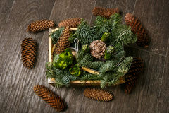 Ветвь сосны с иглами и конусом Стоковая Фотография RF