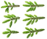 Ветвь сосны Стоковое Изображение