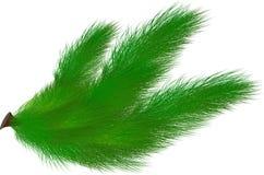 Ветвь спруса Стоковое Изображение RF