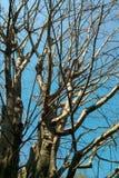 Ветвь сухого дерева Стоковое Фото
