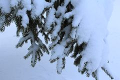 Ветвь съела под снегом в зиме в лесе стоковая фотография rf