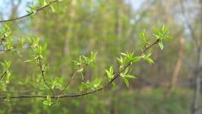 Ветвь с зелеными листьями на заходе солнца акции видеоматериалы