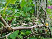 Ветвь с листьями Стоковая Фотография