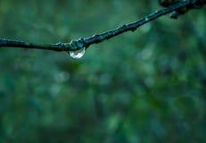Ветвь с падениями росы стоковое изображение