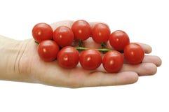 Ветвь томатов вишни в руке Стоковое Фото