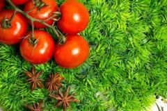 Ветвь томатов вишни зрелых на зеленой траве, анисовке играет главные роли Стоковое фото RF