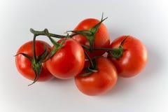 Ветвь томатов на светлой предпосылке стоковое фото