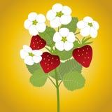 Ветвь цветений клубники Стоковое Изображение