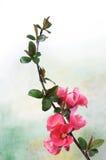 ветвь цветет пинк Стоковая Фотография RF