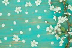 Ветвь цветков вишни на старой доске Стоковые Фото