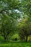 ветвь яблок яблока fruits сад листьев Стоковая Фотография RF