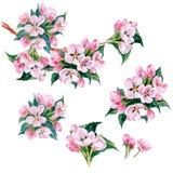 Ветвь яблони акварели с цветками желтый цвет весны лужка одуванчиков предпосылки полный вектор иллюстрация штока