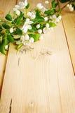 Ветвь яблони с зацветать цветет на деревянной доске Стоковые Фото