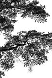 ветвь Стоковое фото RF