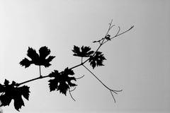 ветвь Стоковая Фотография