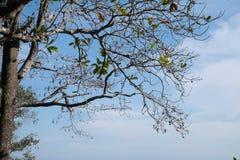 Ветвь Стоковые Фото