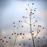 ветвь Стоковое Фото