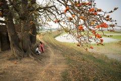 Ветвь blossoming дерева ceiba Bombax или красного цветка Silk хлопка с въетнамскими девушками в традиционной длинной ООН Ao Dai п Стоковые Изображения RF