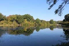 Ветвь Brook Park стоковое фото rf