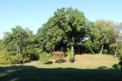 Ветвь Brook Park стоковая фотография