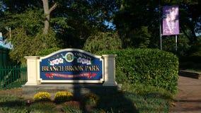Ветвь Brook Park стоковые изображения