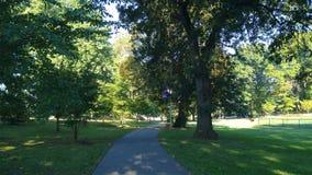 Ветвь Brook Park стоковое изображение rf