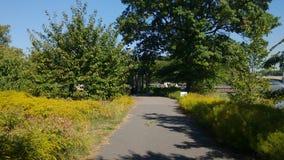 Ветвь Brook Park стоковая фотография rf