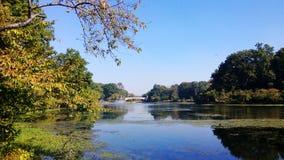 Ветвь Brook Park стоковое фото