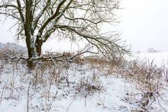 Ветвь decideous дерева покрытая снегом Ландшафт Стоковая Фотография RF