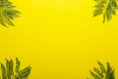 Ветвь Jakaranda на желтой предпосылке творческое изображение Стоковая Фотография