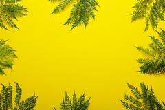 Ветвь Jakaranda на желтой предпосылке творческое изображение Стоковые Фотографии RF