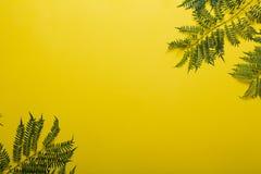 Ветвь Jakaranda на желтой предпосылке творческое изображение Стоковые Изображения RF