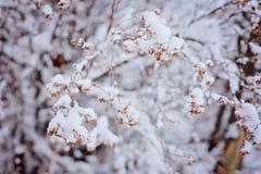 Ветвь Snowy в wintergarden Стоковое Изображение