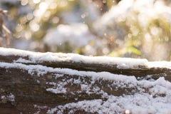 Ветвь Snowy Стоковые Фото