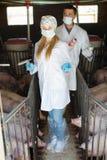 2 ветеринара в защитной одежде Стоковая Фотография