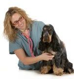 Ветеринарная внимательность стоковые изображения