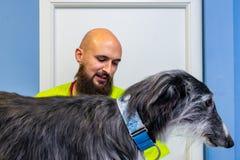Ветеринарная консультация, ветеринар проверяя борзую стоковое изображение