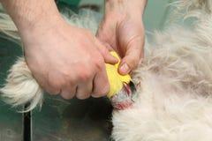 ветеринарно стоковые изображения rf