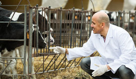 Ветеринарный техник позаботить о икры стоковые фотографии rf
