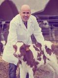 Ветеринарный техник позаботить о икры стоковые фото
