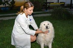 Ветеринарный техник Стоковое фото RF