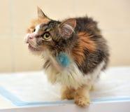 Ветеринары кота Стоковое Изображение