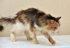 Ветеринары кота Стоковые Фотографии RF