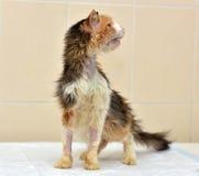 Ветеринары кота Стоковое фото RF