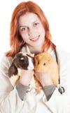 Ветеринар женщины держащ 2 морской свинки Стоковые Фото