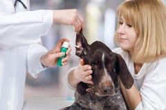 Ветеринар использует некоторую медицину пока обрабатывающ собаку стоковое изображение rf